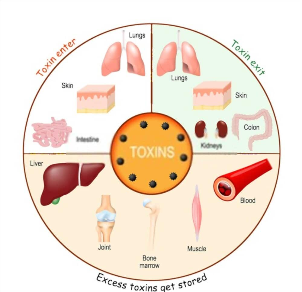 Clean Your Blood And Eliminate Toxins How To Detoxify Blood Naturally
