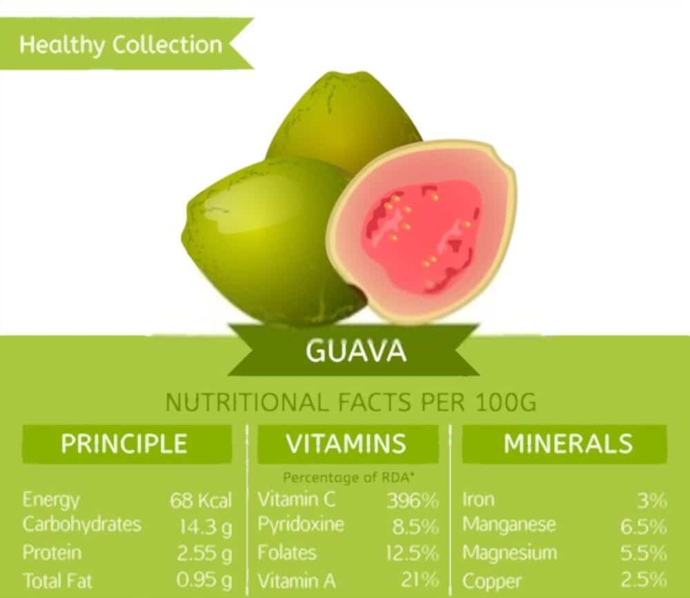 Guava Leaves What is it for Guava Benefits and Contraindications