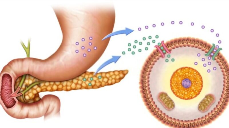 Detoxifies your body of sugar  how to remove accumulated sugar and clean the body
